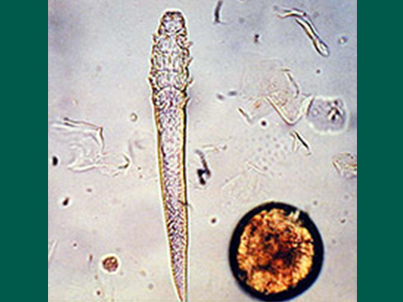 800X600 Demodex Cati